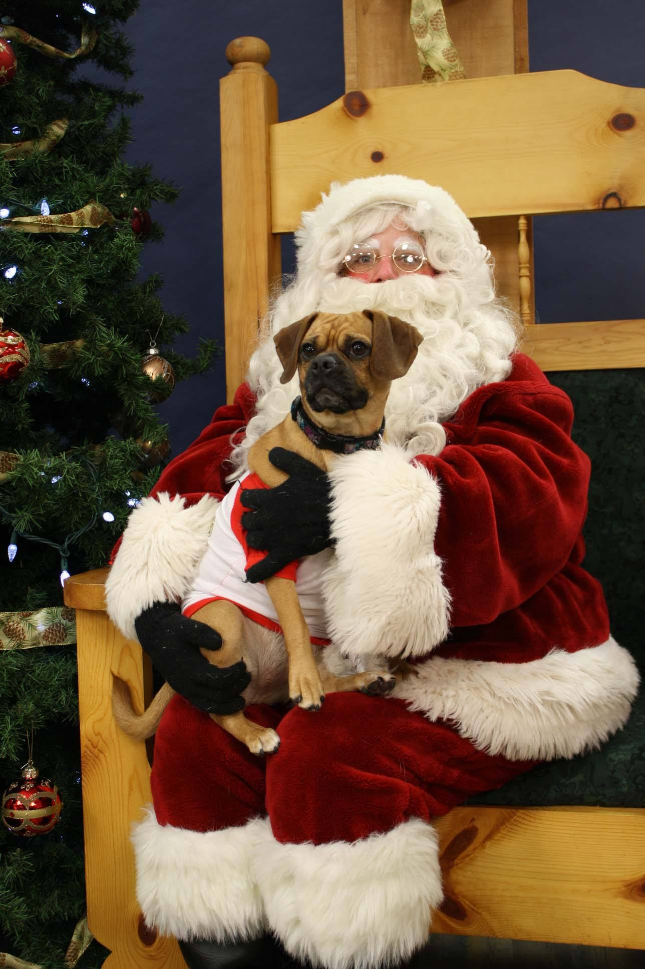 christmas furry friends dressed up for the holidays - Christmas Furry