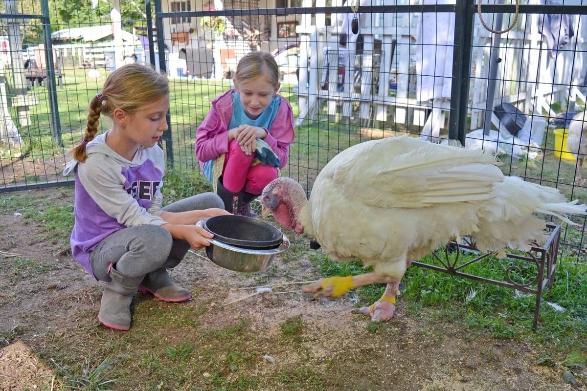 South Surrey eight-year-old turns lemonade into hay for injured farm animals