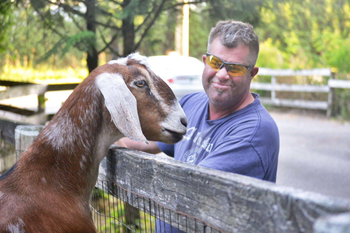 Video B C Farm Rents Out Goats To Mow Lawns Surrey Now Leader