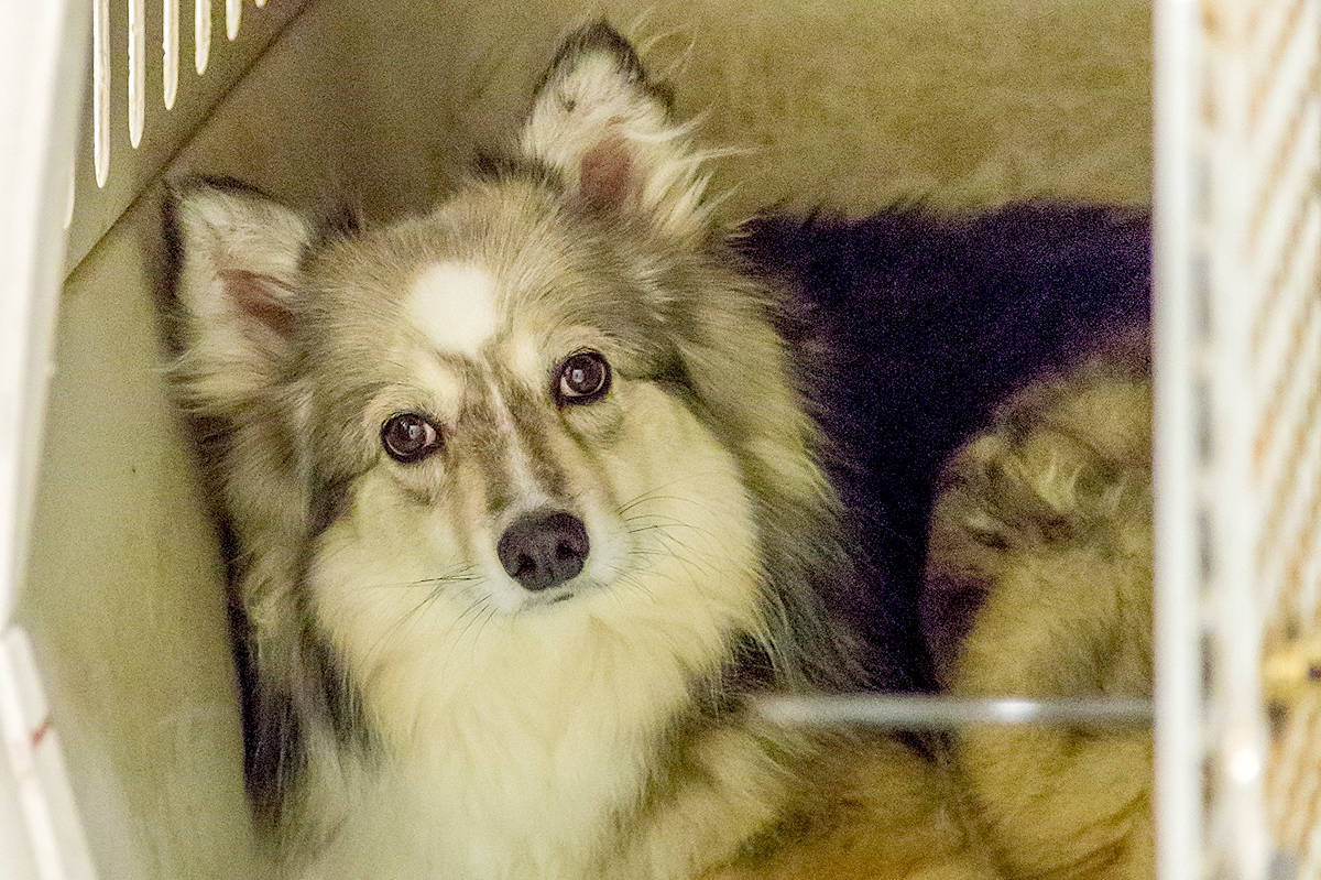 B.C. dog breeder banned again after 46 dogs seized