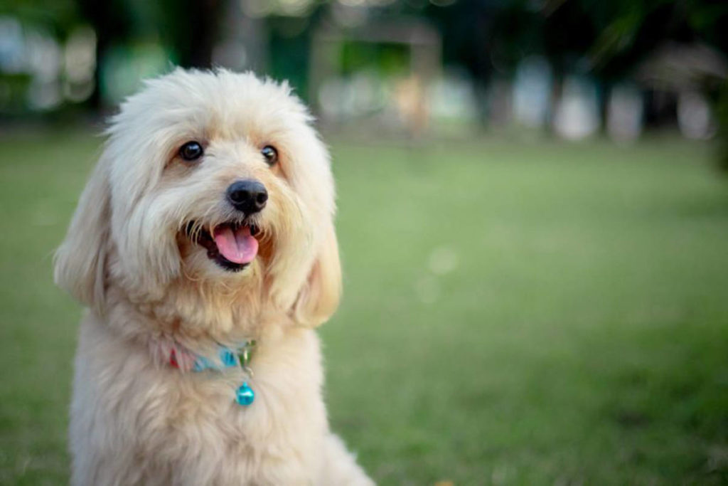 BC SPCA warns dog owners of contagious cough - Surrey Now-Leader